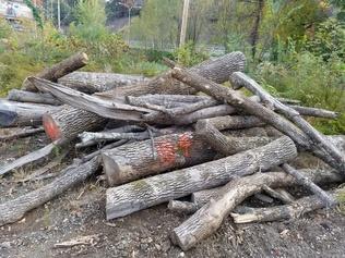 Timber Processors